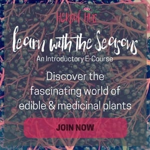 Learn with the seasons autumn 300x300