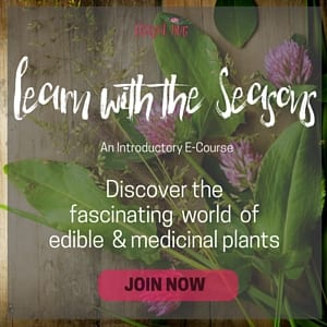 Learn with the seasons pink 300x300 (1)