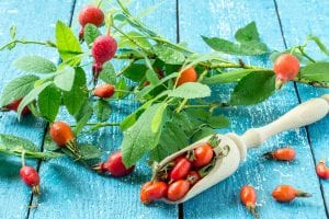 herbal medicne autumn foraging