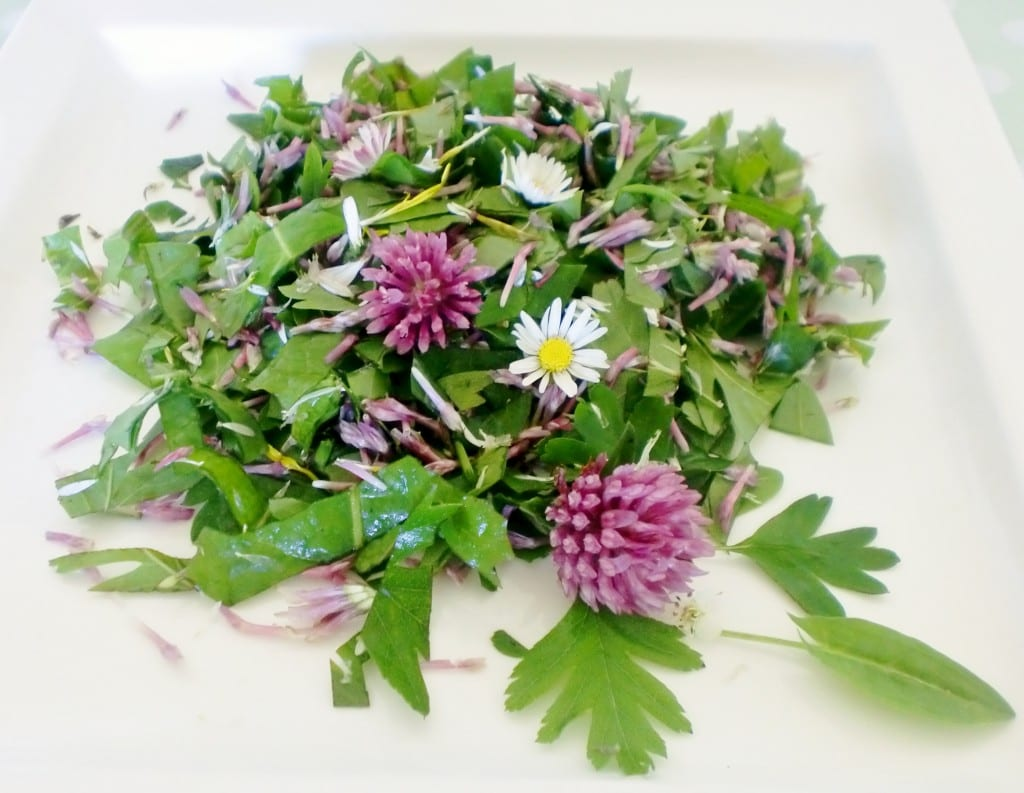 Spring & early summer e-course. Foraged salad.