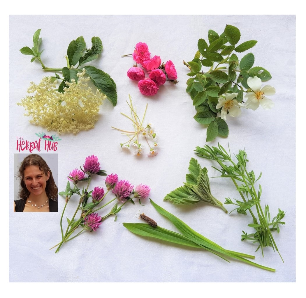 Home - The Herbal Hub with Vivienne CampbellThe Herbal Hub with